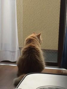 外を眺めるぱんちちゃん